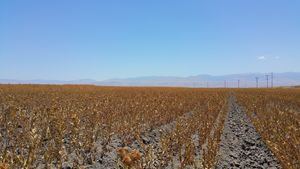 Fields of California