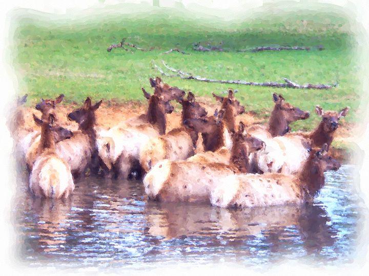 Elk Crossing - Trulas Treasures