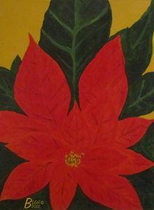 Poinsettia 2013