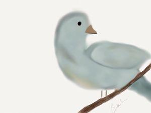 Looking bird