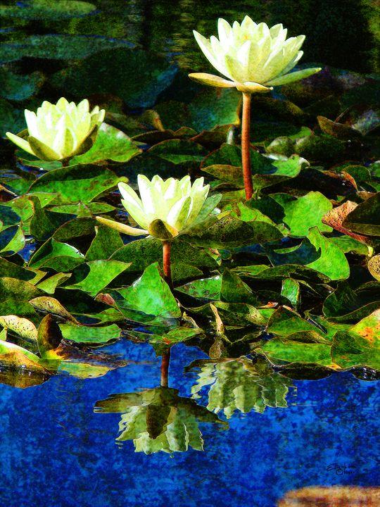 Lillypadism - Elizabeth Oliver muddled photography