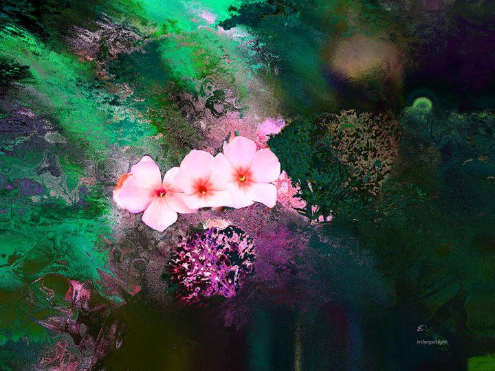 inthespotlight - Elizabeth Oliver muddled photography