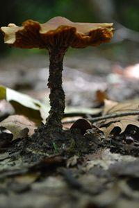 Mushroom Portrait