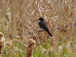 Bird On A Wire Fence - WinterFlowerArt