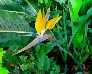 """Beyond Bird-of-Paradise"" - Bigan Fanli"