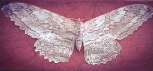 floral shift moth