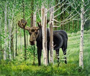 Moose in Grand Lake