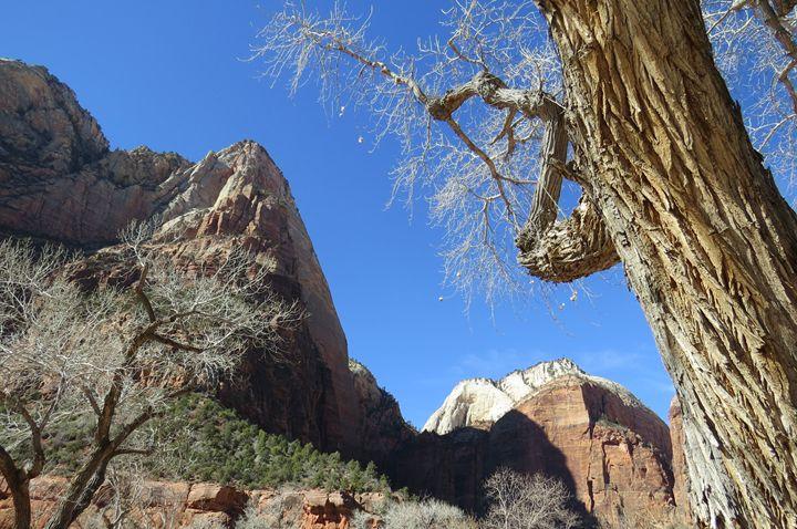 Trees of Zion - Jodie Herpel