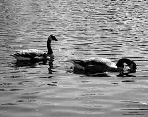 Floating Around