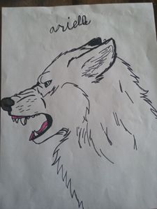Growling wolf 1