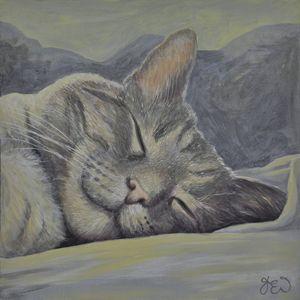 Lazy Days Sleeping Cat 1