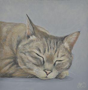 Lazy Days Sleeping Cat 3
