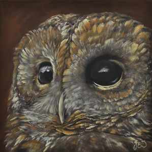 The wise brown tawny owl