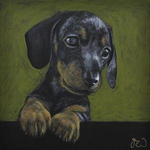 dashchund puppy
