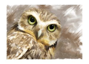 Owl - Jovan watercolors