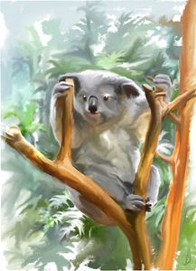 Koala - Jovan watercolors