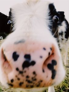 A Little Nosey