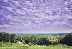 Deer on summer day