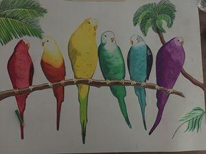 Rainbow parakeets