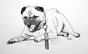 Pug Yawning