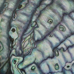 Abalone #2