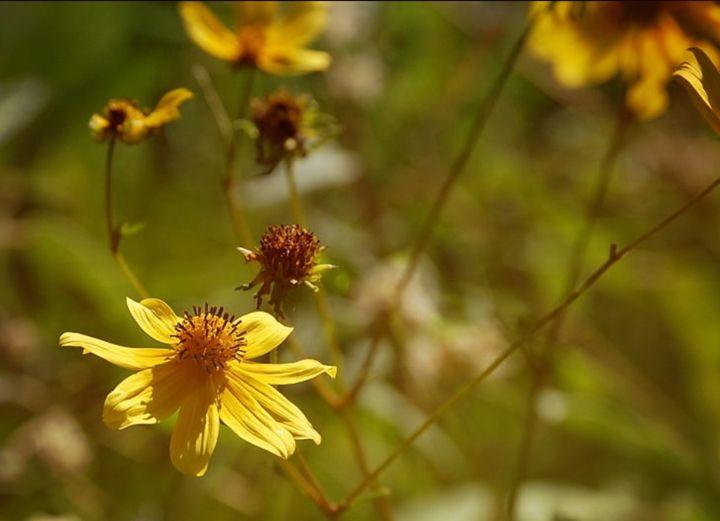 Flower Fields - Jennifer Swinner Photography