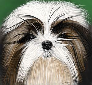 Cutie puppy shih tzu
