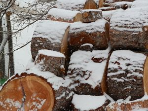 Cut Logs in Winter