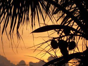 Coconut sunrise