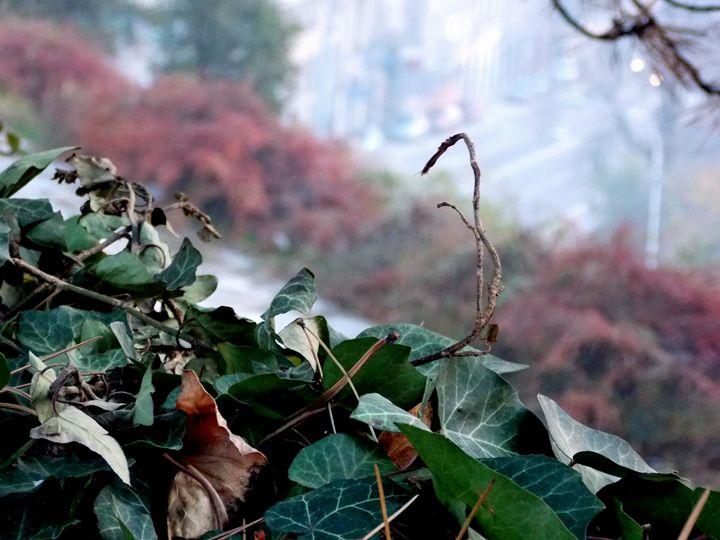 Foggy Autumn Day - dadaart
