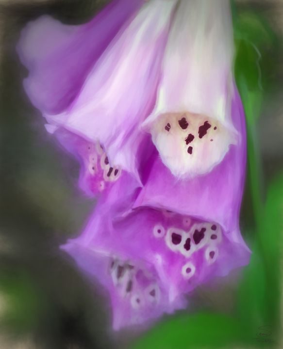 Foxgloves in the Garden - Version 2 - Sean Toler Photo
