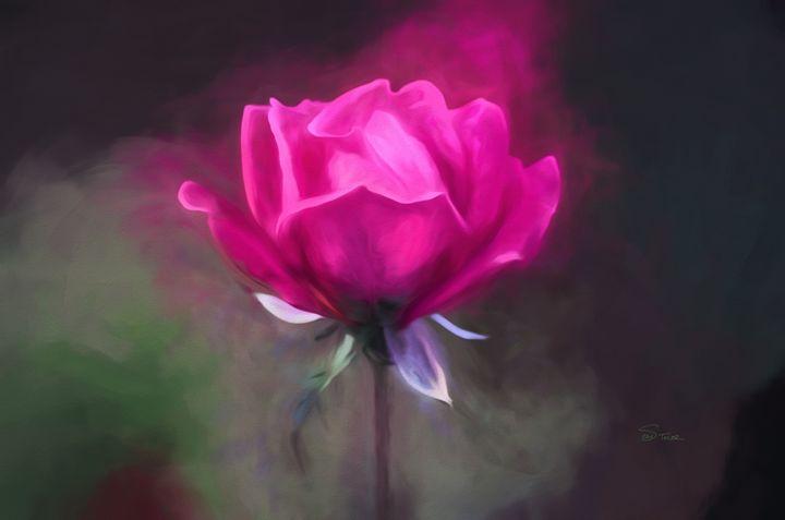 The Rose - Sean Toler Photo