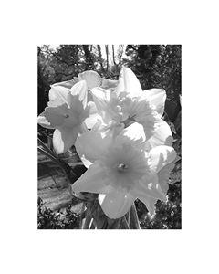 Endless Spring - 1