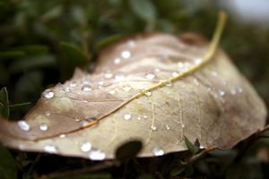 Droplets of Fall