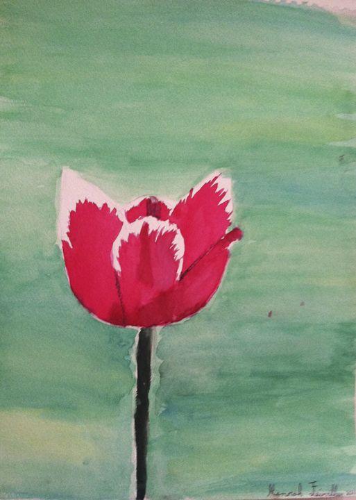 Tulip - Hannah Feinsilber's Art
