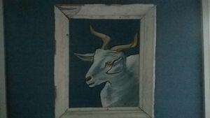 Goat Albino