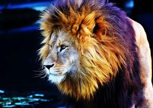Lion at waterhole