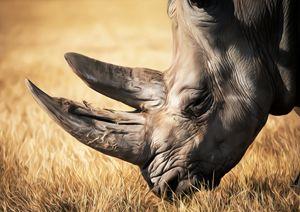 Rhino In African Grassland.