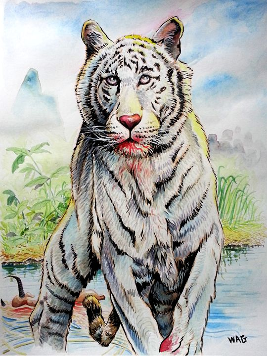Tiger hunt 1 - Wag