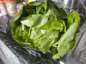 Lettuce the green rose - Vanessa Schlachtaub Bruni