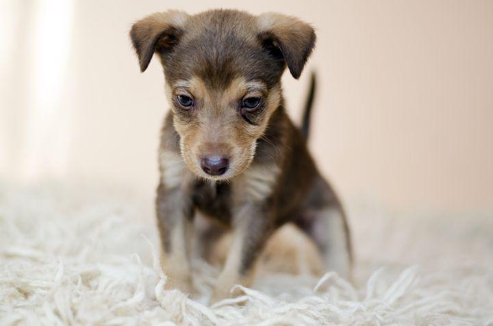A puppy. - Martina's art