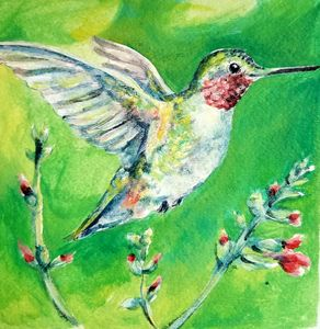 Hummingbird Dream - Prints from Creation Creatures