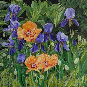 Iris and Poppies Hudson Gardens