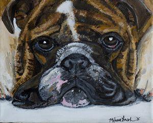 Brindle Bulldog