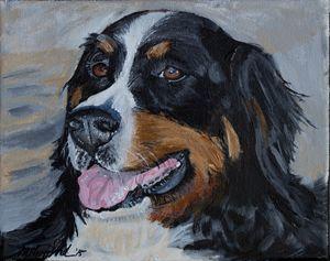 Burnese Mountain Dog