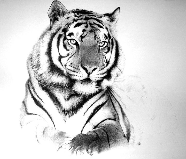 Tiger - AMRAA