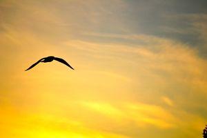 Bird at Sunset