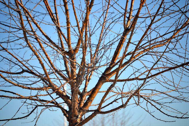 Alaskan Tree - Emilie Stout