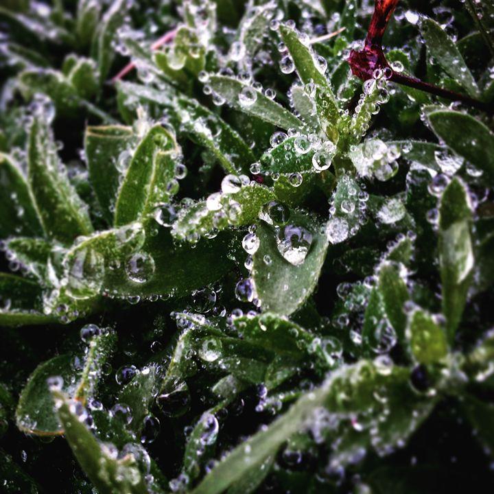 Water Droplets and Weeds 3 - Amanda Hovseth