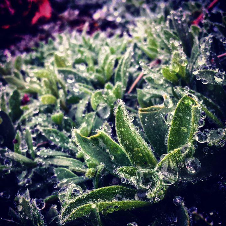 Water Droplets and Weeds 2 - Amanda Hovseth